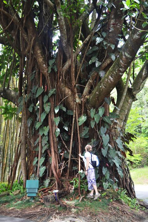 chiangmaimountain90