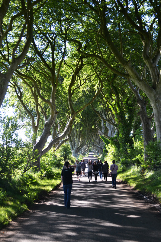 darkhedges1