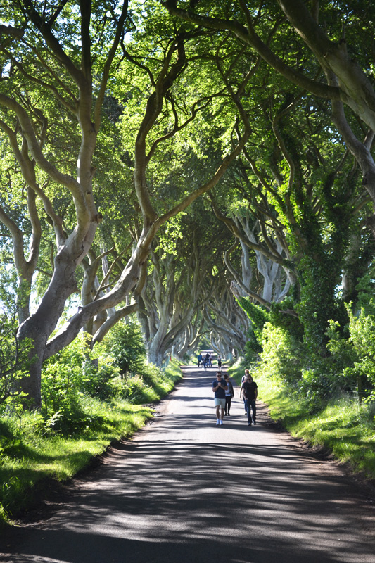 darkhedges6