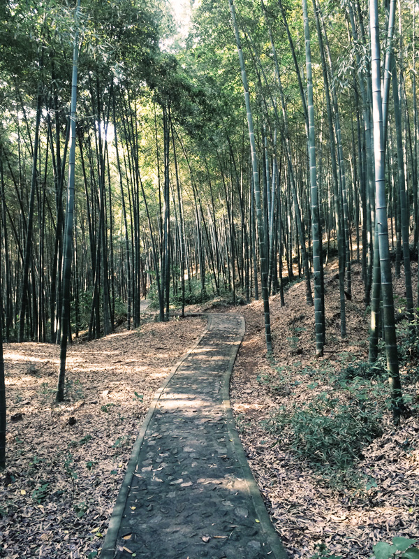 bambooforest1