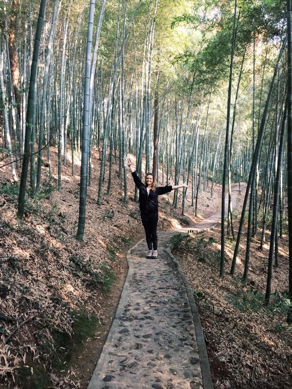 bambooforest4