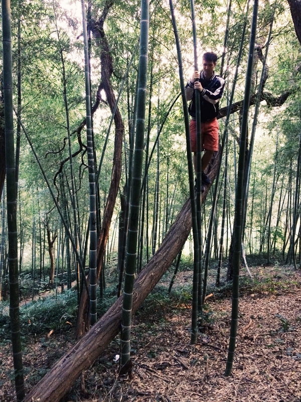 bambooforest8