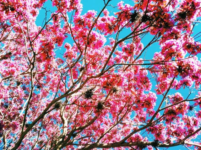 Beautiful spring blooms in St. Petersburg, Florida